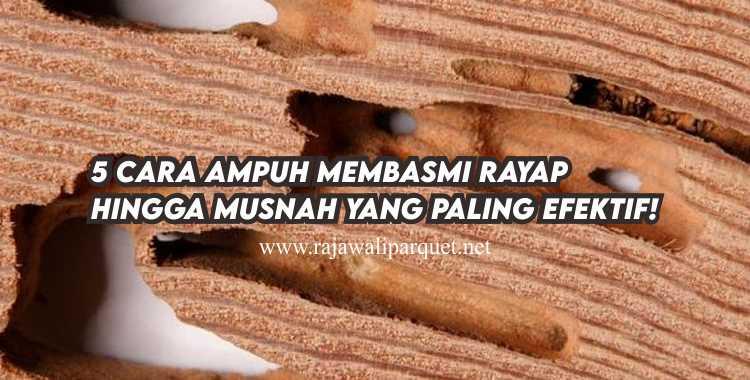 cara basmi rayap